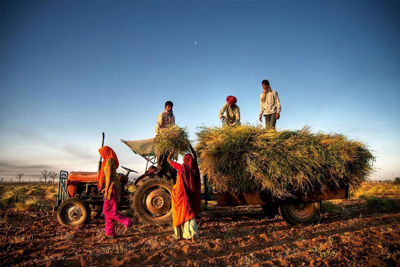 Selama Pandemi, FAO himbau masyarakat beli makanan dari usaha kecil dan menghargai petani, nelayan, peternak